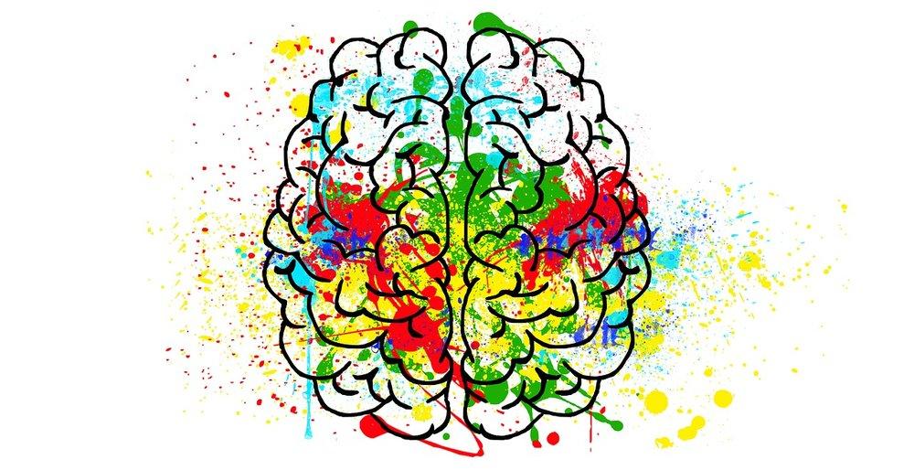 brain-hjerne