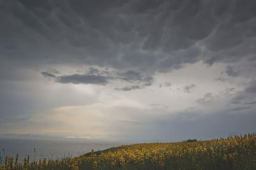 Dark-clouds-over-yellow-field-7253.jpg