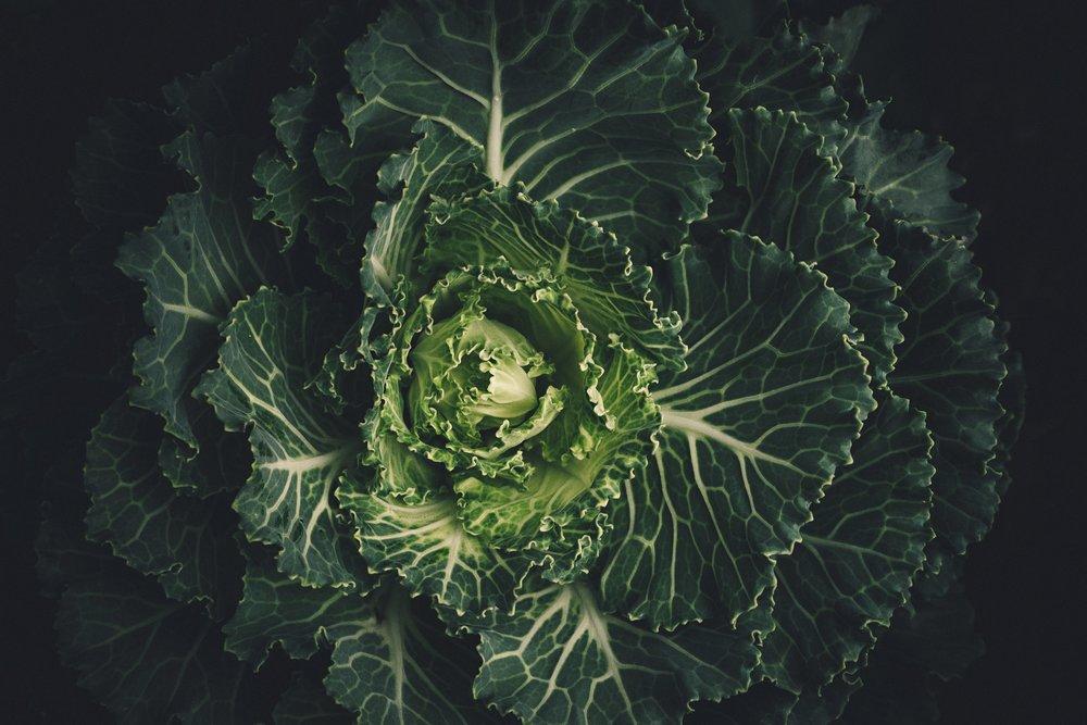 FOOD & NUTRITION -