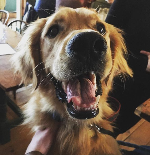 Smile! It's Craft Beer Week and so many doggos are coming to visit me! #nhcraft beer week #joey #smiles #happyhappy @nhbeertrail ... #nhcbw2019 #nhcbw19 #nhbrewers #nhbeertrail #nhbeer #nhcraftbeer #craftbeerweek #craftbeer #drinknh #supportyourbrewer #seektheseal #independentbeer #drinkcraft #nhba