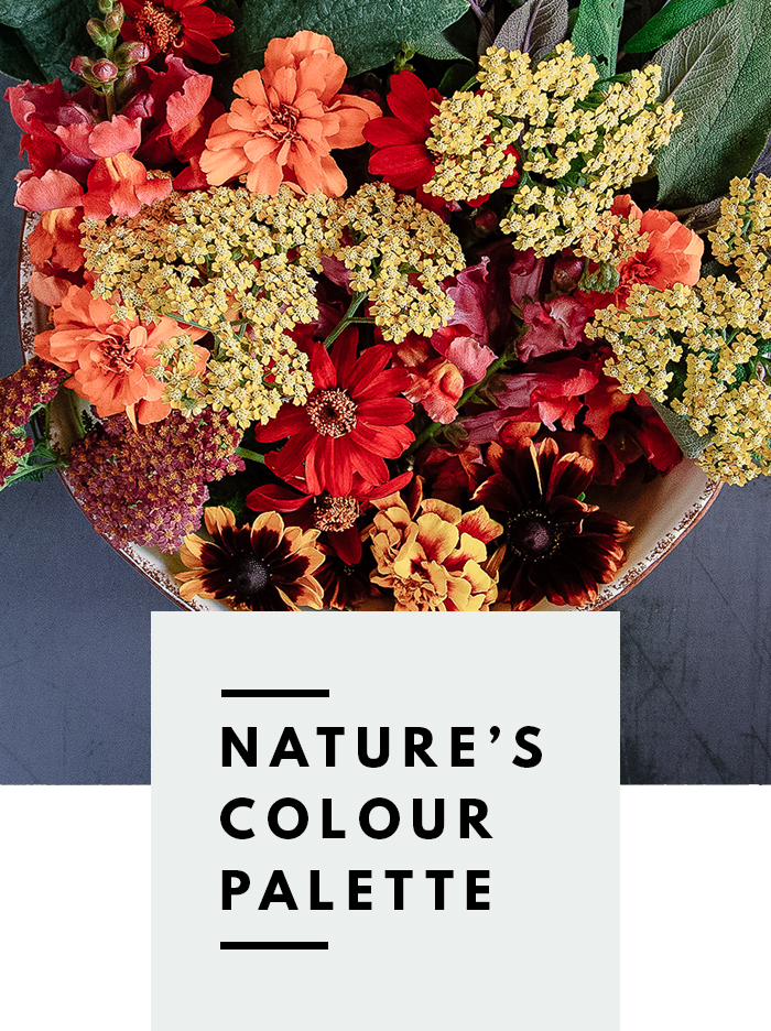 botanical-folk-natures-colour-palette-natural0-dye-plants.png