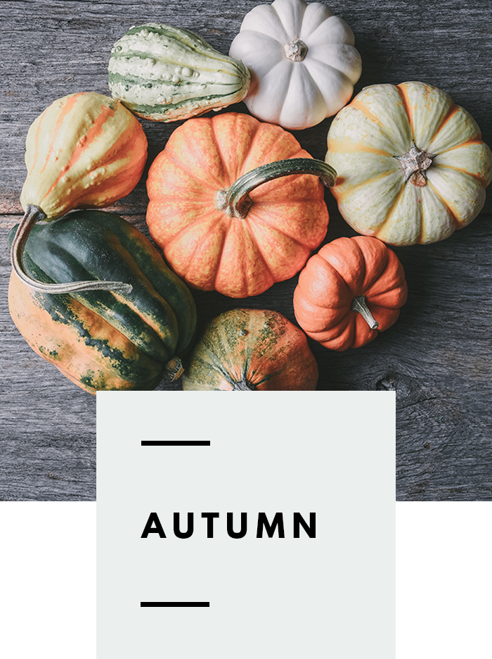 botanical-folk-autumn-growing-guide.png