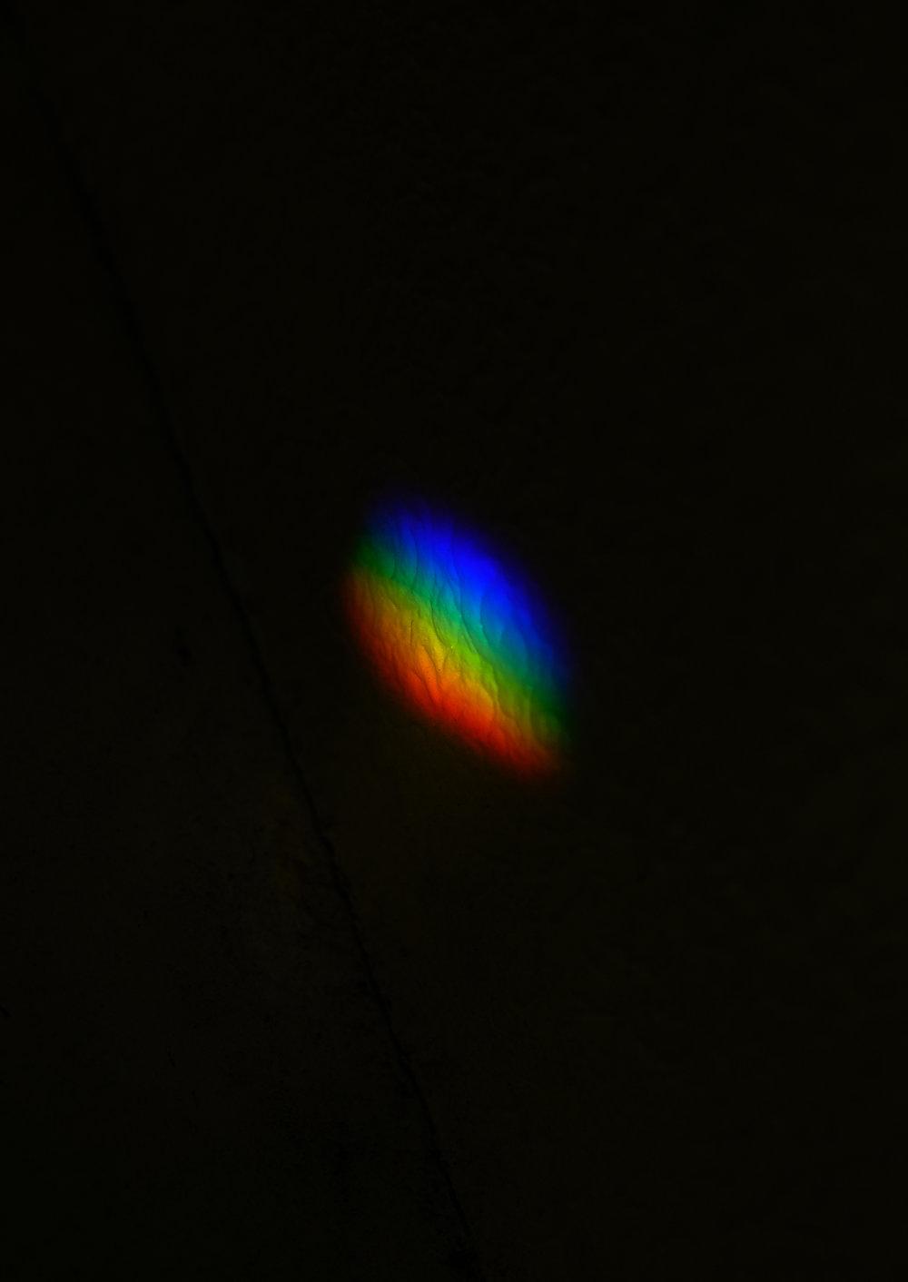spot rainbow.jpg