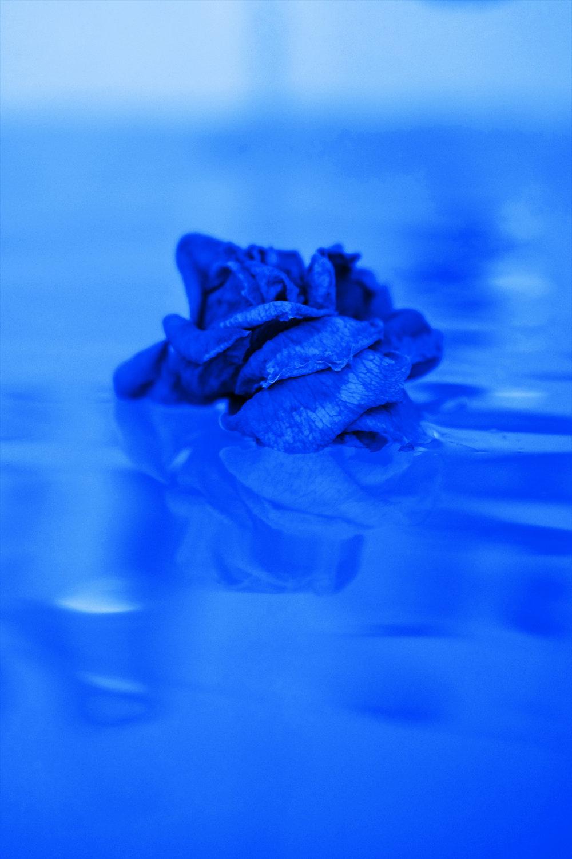 blue rose water.jpg