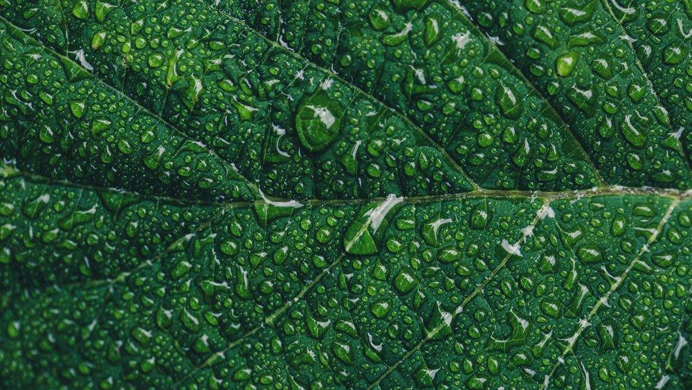 dew-drop-droplet-544980.jpg