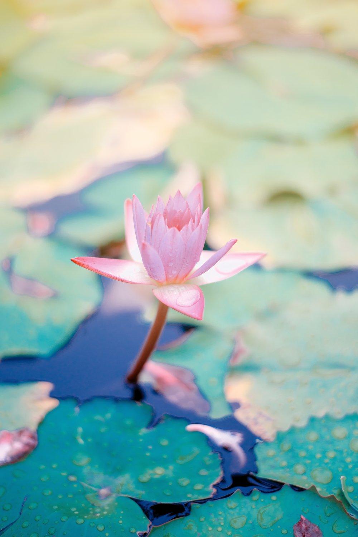 Healing til dig - Alt er energi, også dig. Er din energi i balance er dit liv også. Hvis ikke så lad mig hjælpe dig. Skriv dig op på nyhedsbrevet og få besked om når der er åbent for healing.