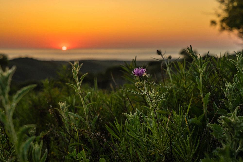 sunset10.jpg
