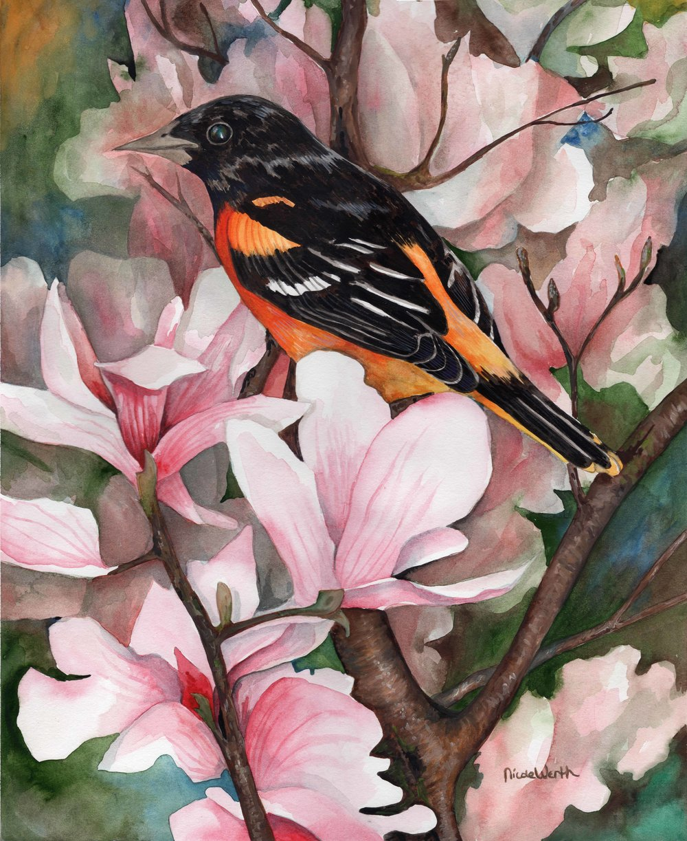 Baltimore Oriole with Magnolia Blooms