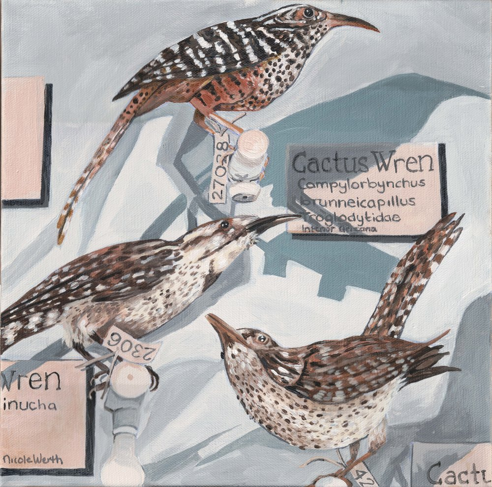 Wren Exhibit
