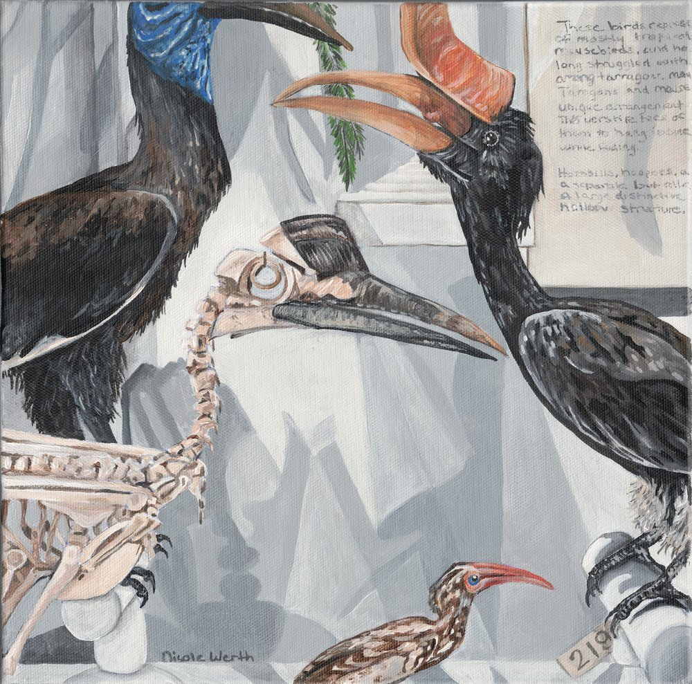 Hornbill Exhibit