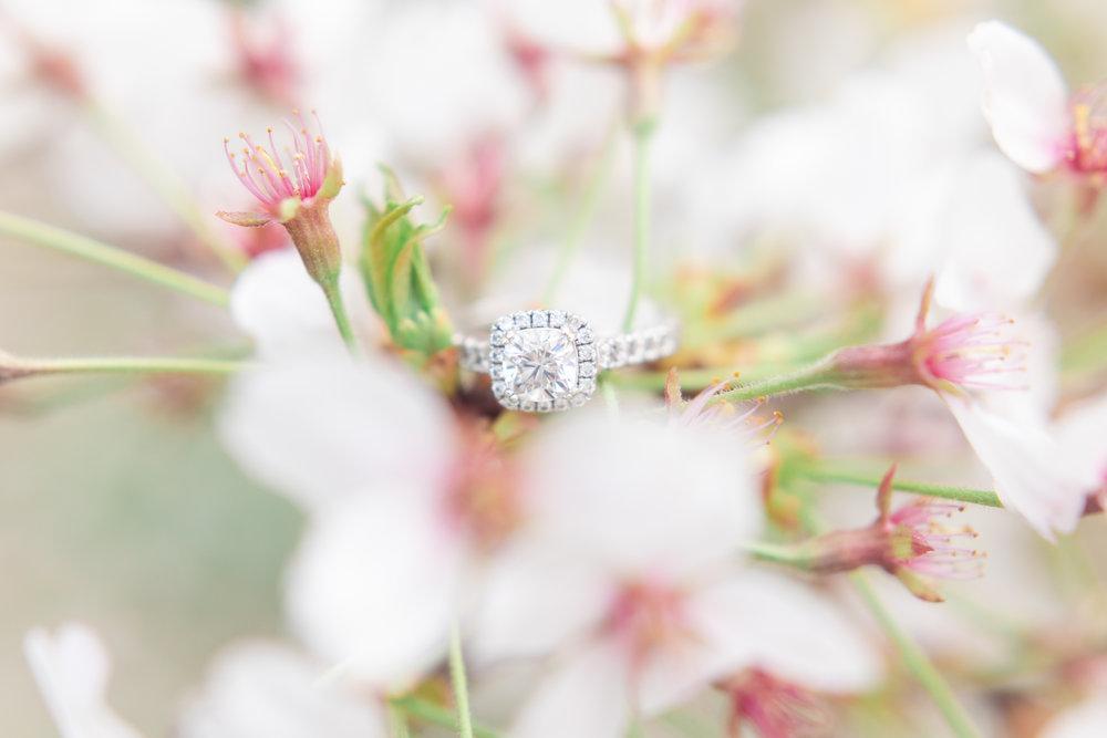mjmp shannanjohn dc cherry blossom engagement session-18.jpg