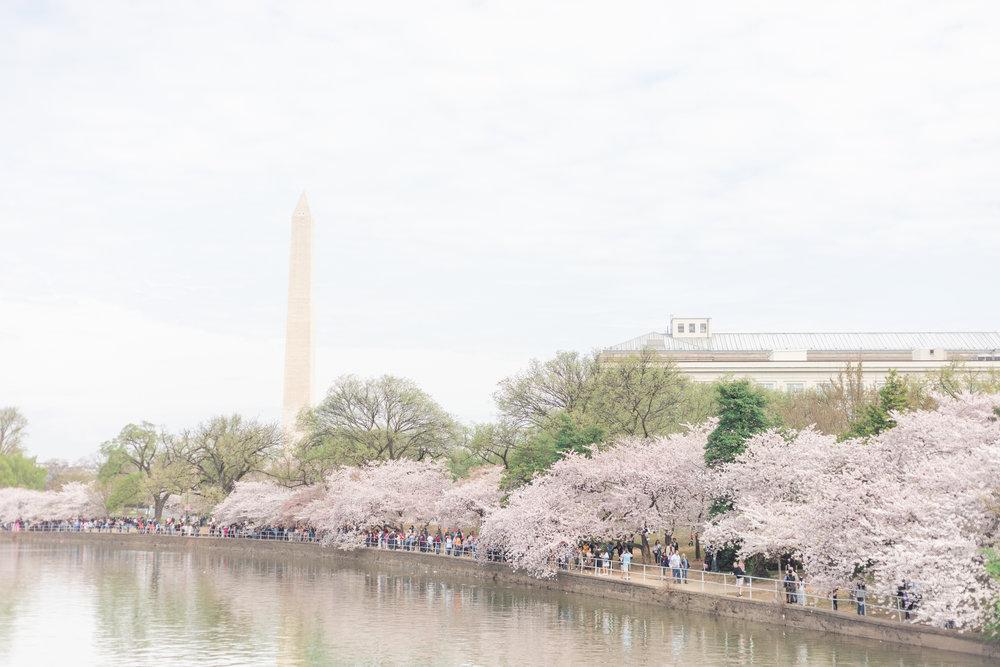 mjmp shannanjohn dc cherry blossom engagement session-22.jpg