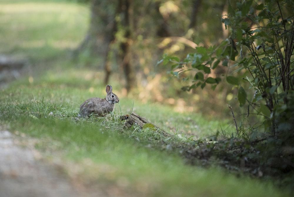 Conigli della Riserva Naturale del TOce