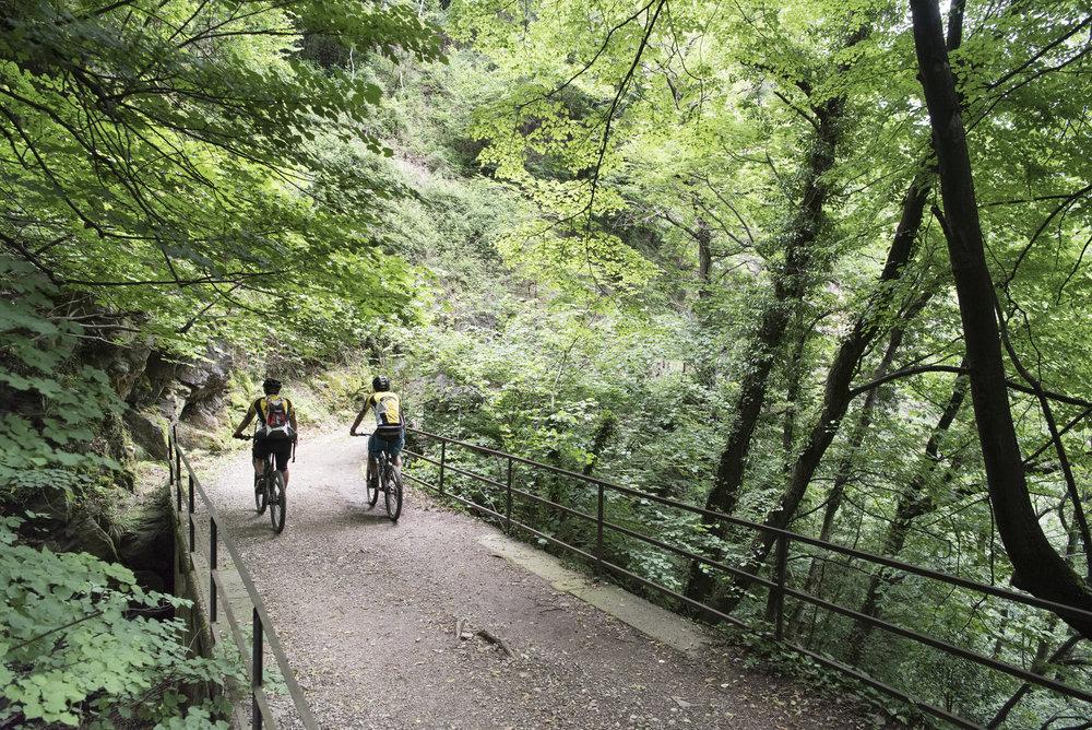 Nei boschi della Linea Cadorna