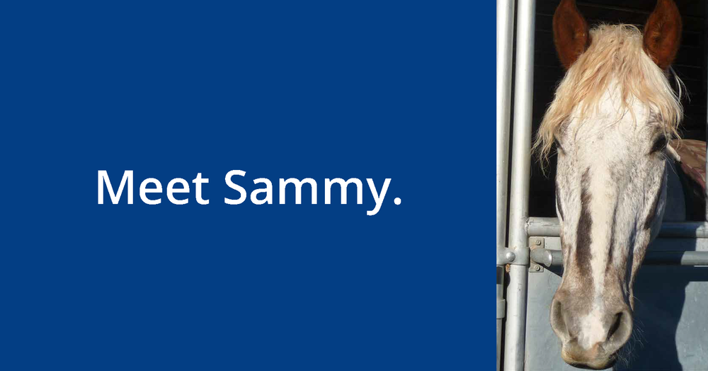 Meet Sammy GIF copy_Page_1.png