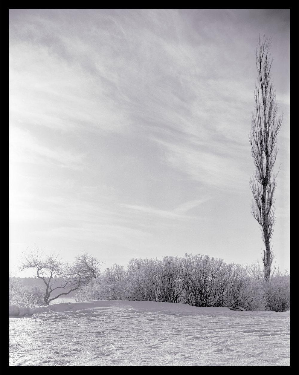 whartontrees.jpg