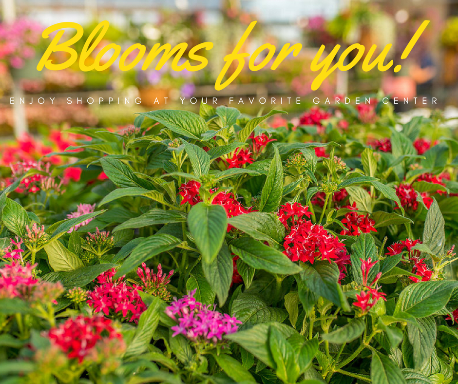 Blooms for YOU.jpg