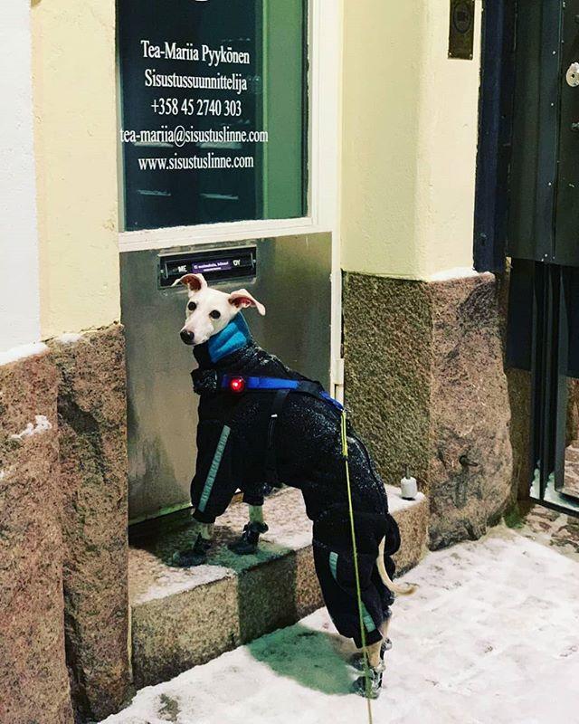 Dogs are always welcome to my office as well 😍 Poor Chlili came after I had left and is demanding longer opening hours! - Myös hauvat on aina tervetulleita toimistolleni 😍 Chili parka ehti paikalle vasta kun olin jo lähtenyt ja vaatii pidempiä aukioloaikoja!  #interiordesign #iggy #princechili #tgif #sisustussuunnittelija