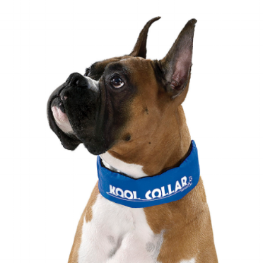 Learn about the Kool Collar Story - Since 1997, Kool Collar has been dedicated to protecting dogs from the heat