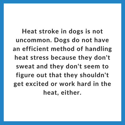 heat stroke in dogs is not uncommon-2.png