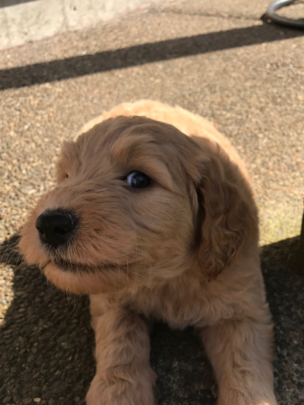 Brand new puppies.