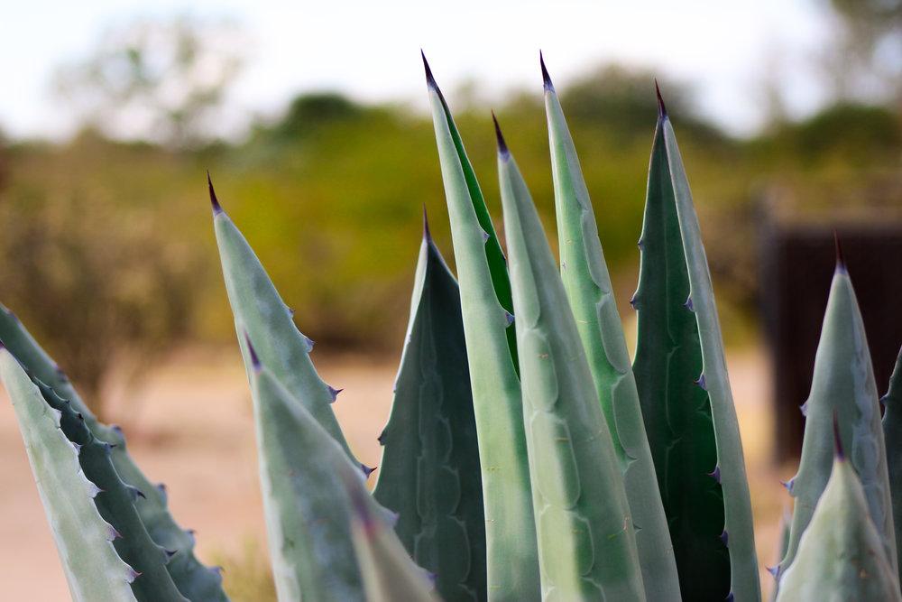 Rancho De Los Caballeros  Wickenburg, Arizona  @Katie.Blankenship.Photography