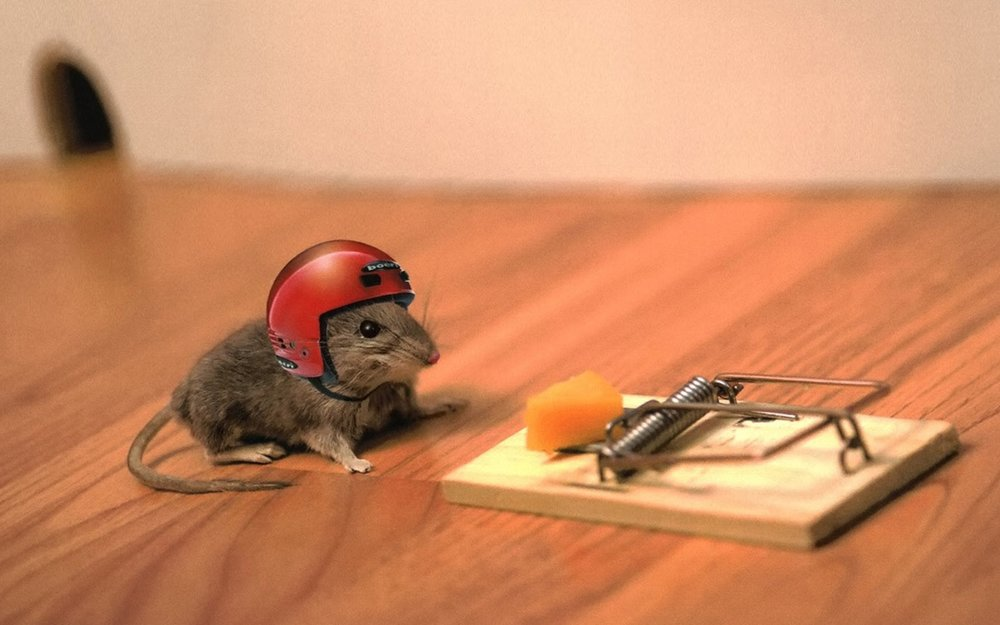 Risk-Taking Mouse.jpg