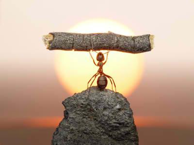 Ant-Belief.jpg