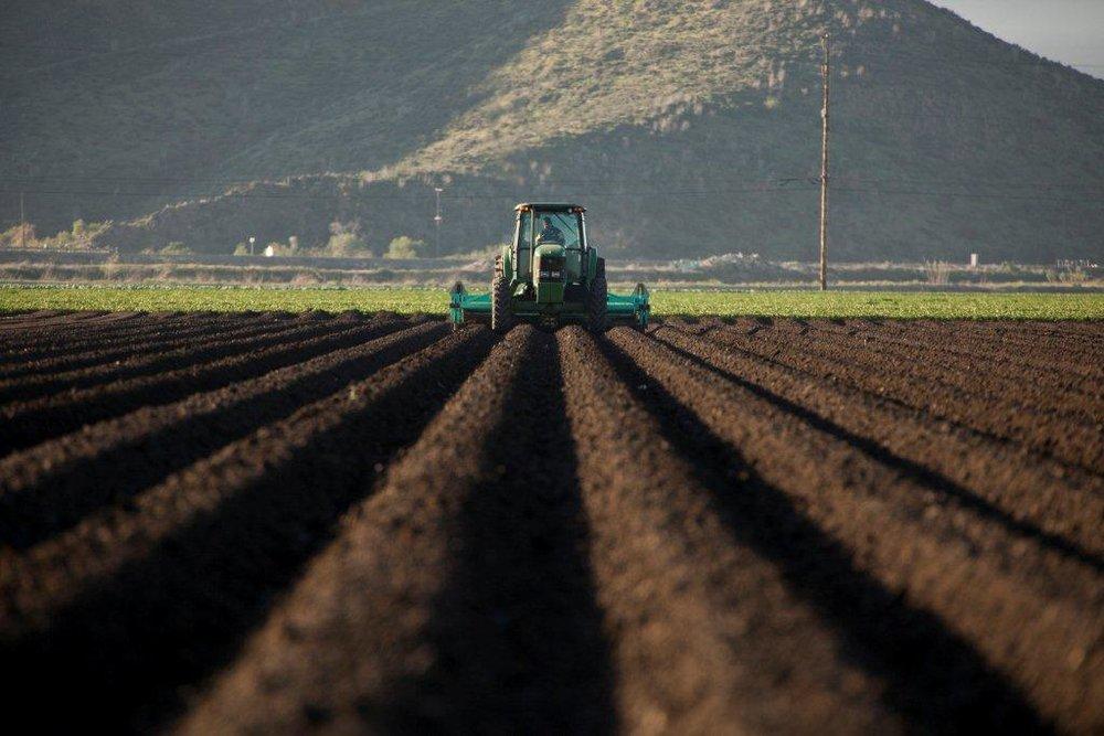 120210_Rio_Farms_Camarillo-027.jpg