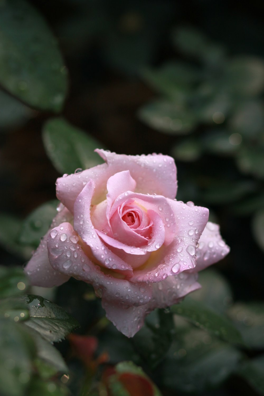 flowers-3352025_1920.jpg