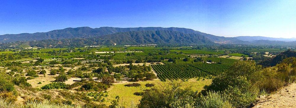 ojai-valley-ojai-ca-california-ojai-olive-oil.jpg