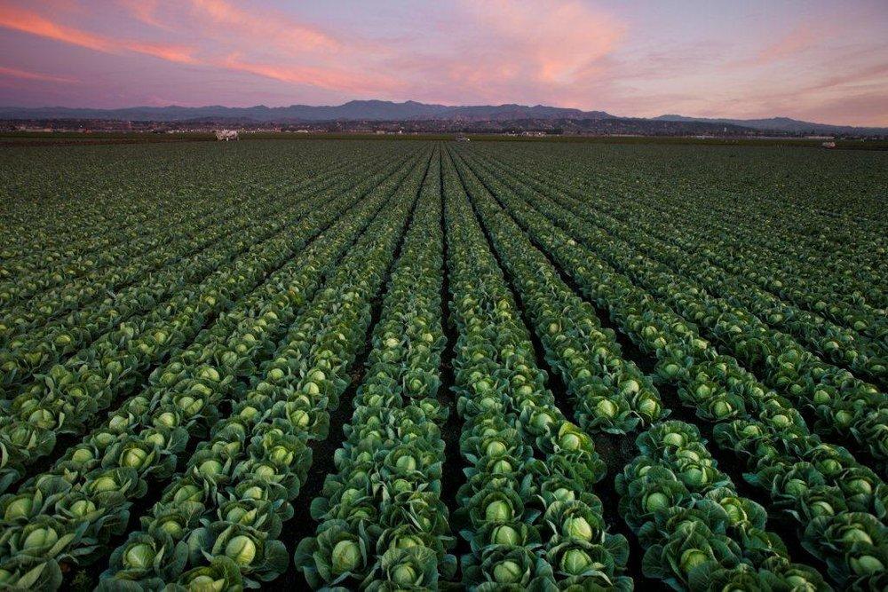 120210_Rio_Farms_Camarillo-105.jpg