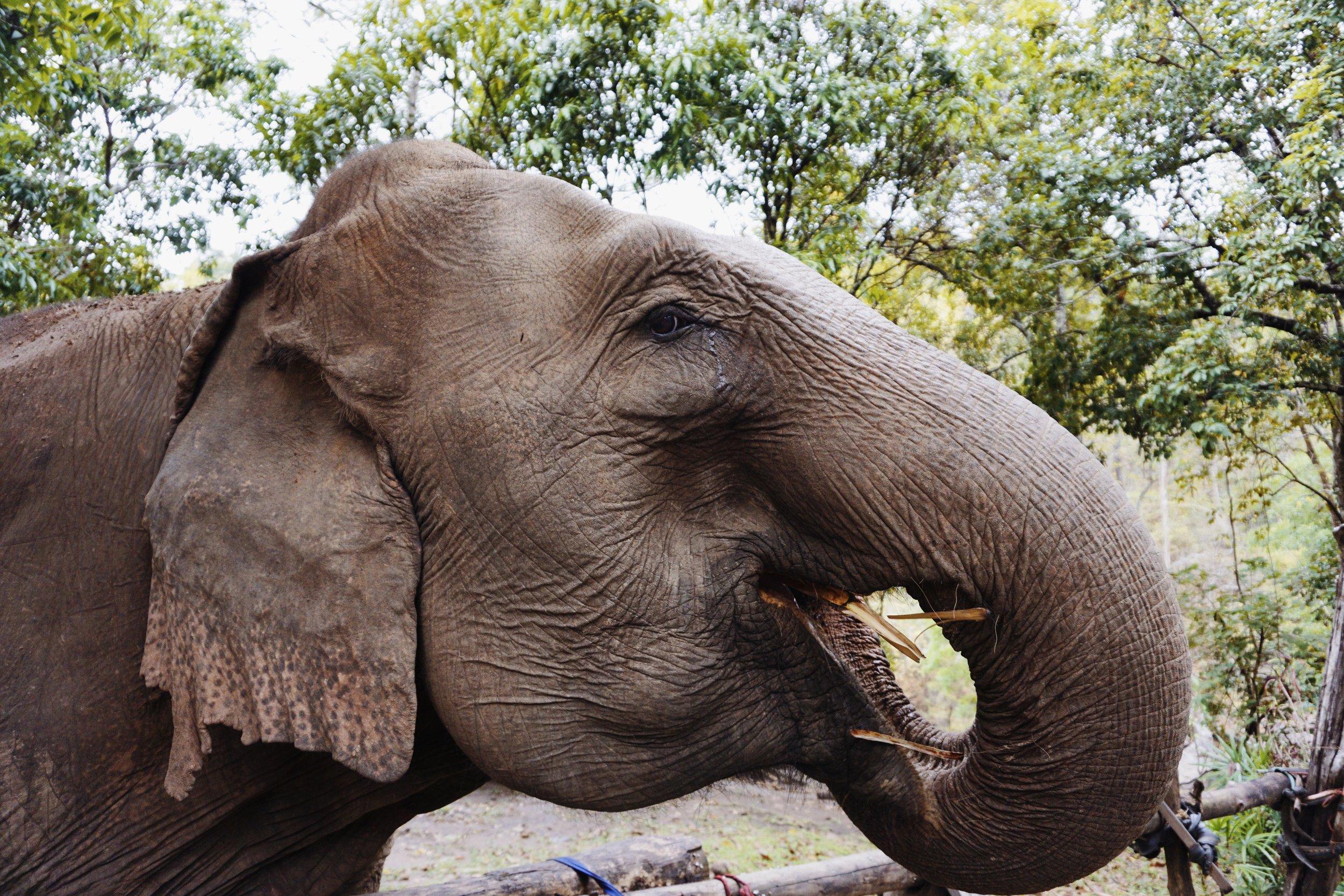 elephants-five