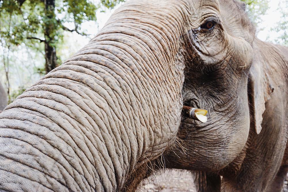 elephants-one