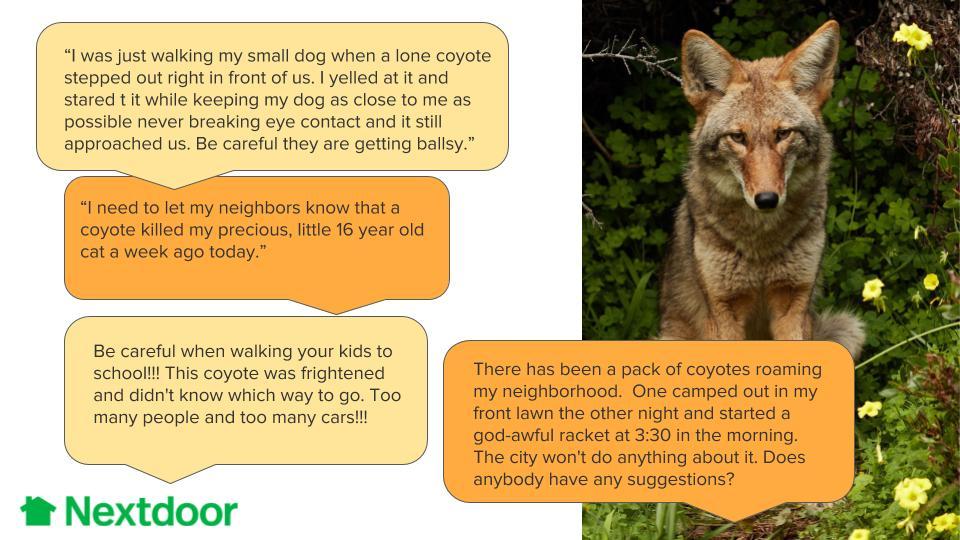 coyoteposts.jpg