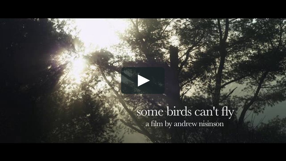 Some Birds Can't Fly (Dir. Andrew Nisinson)