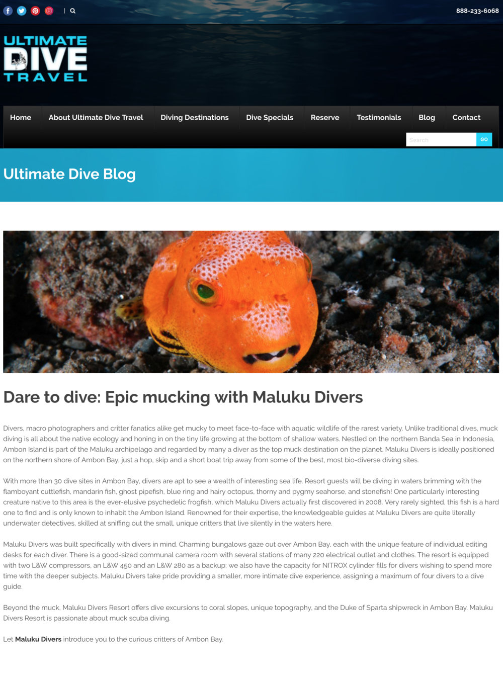 screencapture-ultimatedivetravel-dare-to-dive-epic-mucking-with-maluku-divers-2019-01-09-15_28_45.png