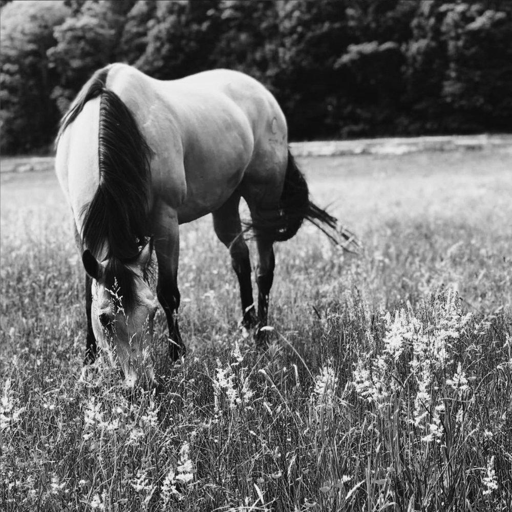 horse photo blog.jpg