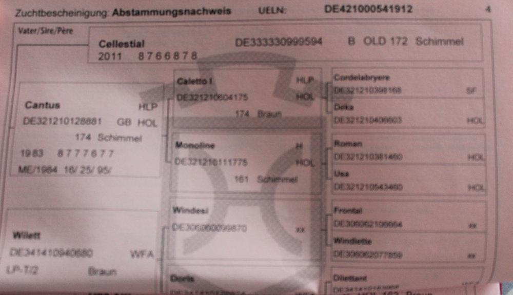 Cellato Passport 4.JPG
