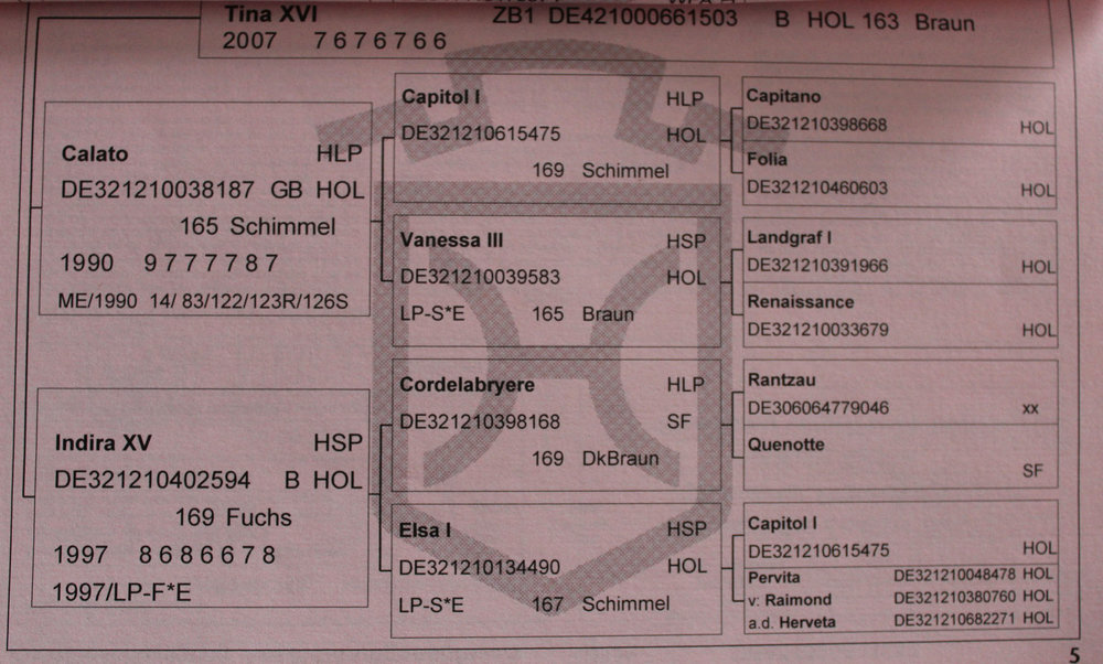 Cellato Passport 5.JPG