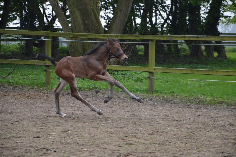 Maranello Running.jpg
