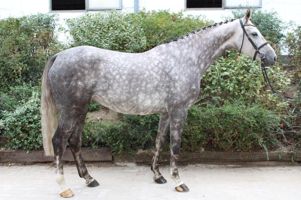 Chiva Right Profile.JPG