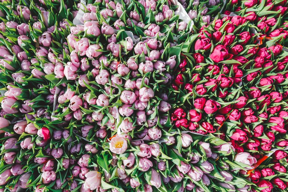 ©DanielleMaingot Copenhagen Torvehallerne Market Tulips