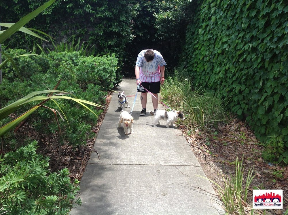dog-walking-sydney.jpg