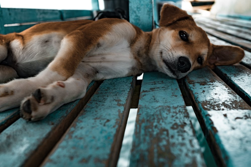 SUMMER-DOGS.jpg