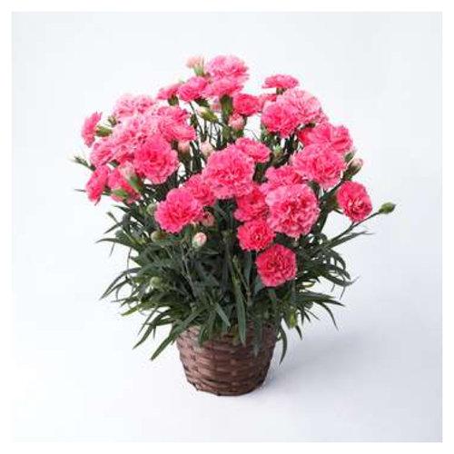 flower8 (1).jpg