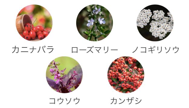 オーガニック原料.png