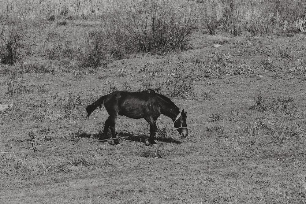 """Zu den Verletzungen, die durch die Arbeit und die schlechte Haltung entstehen, gibt es noch viele andere, die den Tieren vorsätzlich beigebracht werden. Die lethargischen, halb toten Pferde, werden mittels Misshandlungen für den Einsatz für noch ein paar weitere Tage """"gepuscht"""". So leisten sie noch bis zum Tod ihre Arbeit. In den Augen mancher Menschen dort in Rumänien haben die Tiere keinerlei Wert. Einen wirklichen Einblick in die Schrecklichkeit und Grausamkeit der Verhältnisse dort in Rumänien können weder dieser Bericht noch die Fotos auch nur annähernd vermitteln."""