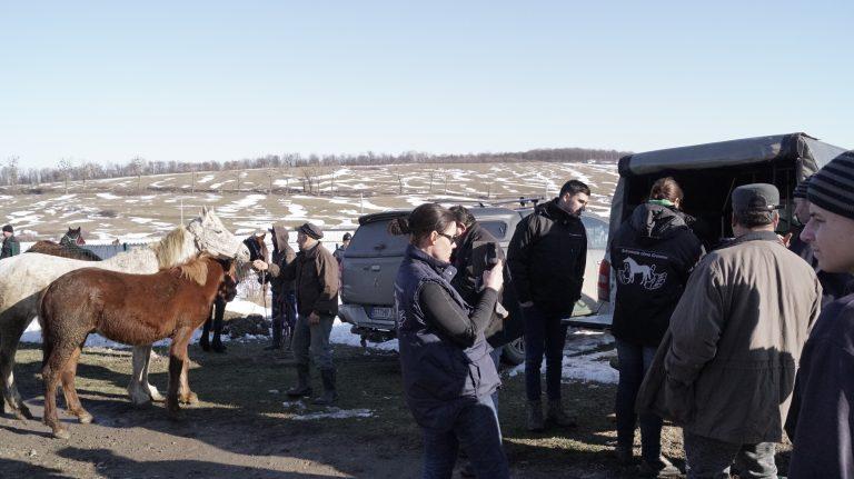 Team Equiwent auf einem Pferdemarkt in Rumänien- Equiwent ist wohl unumstritten eine der stärksten Organisationen für Pferde geworden.