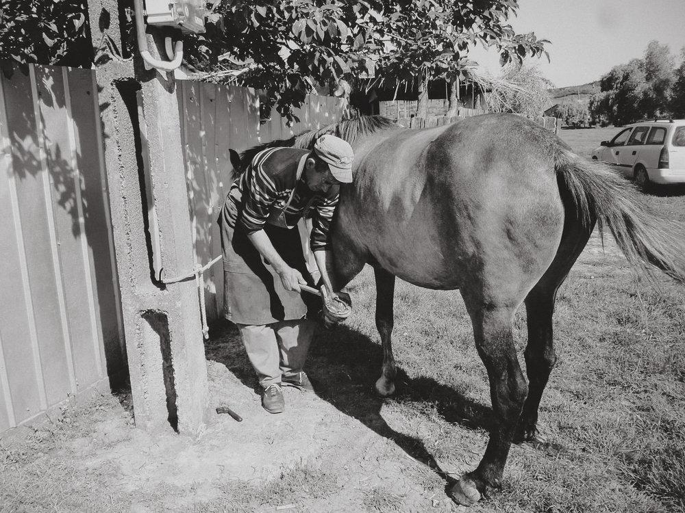 Hier wird gerade ein Pferdebesitzer belohnt. Der Equiwent-Schmied versorgt kostenlos die Hufe weil das Pferd wohl genährt und gut gepflegt ist.